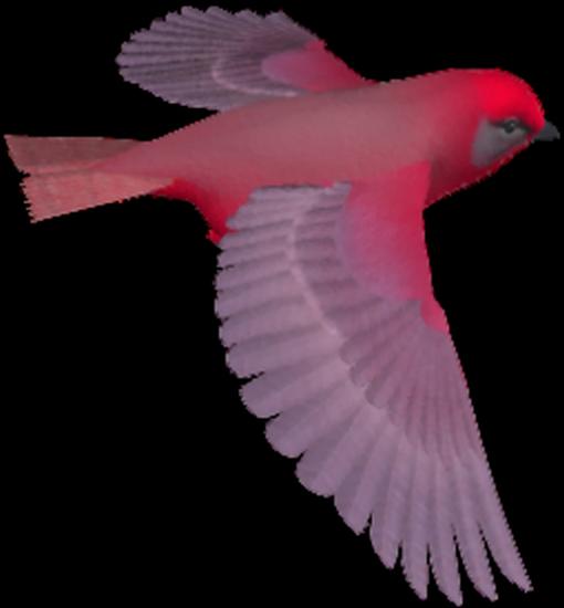 tubes_oiseaux_tiram_211