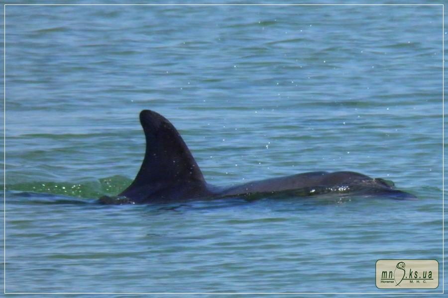 Потрібна інформація про випадки загибелі дельфінів