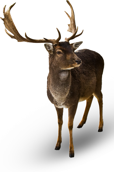 animaux-noel-tiram-106