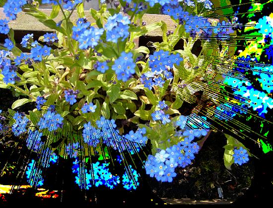 tubes_fleurs_tiram_497