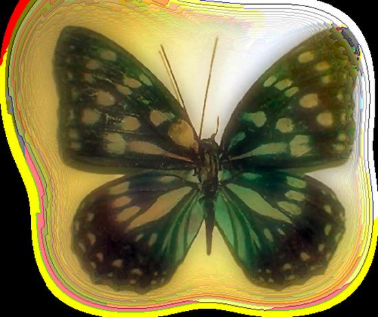 tubes_papillon_tiram_614