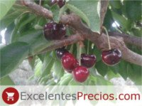 Cherry types: Cristalina