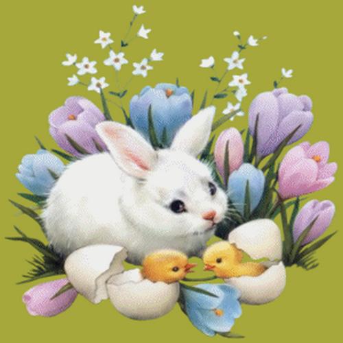 lapins_paques_tiram_216