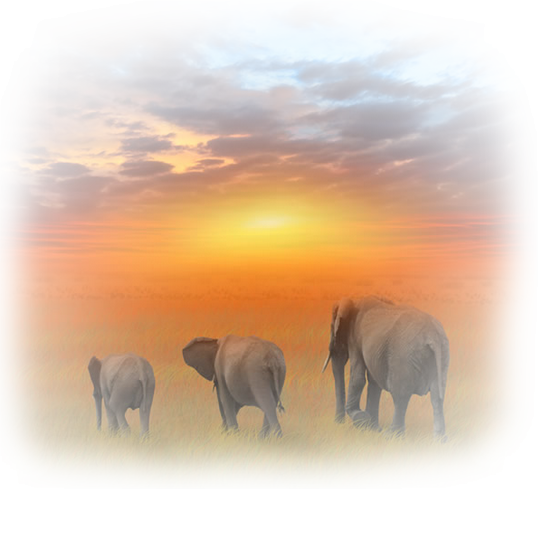 tubes_elephants_tiram_412