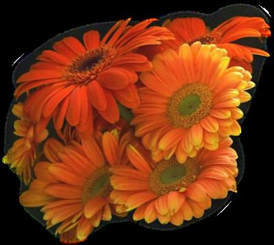 tubes_fleurs_tiram_542