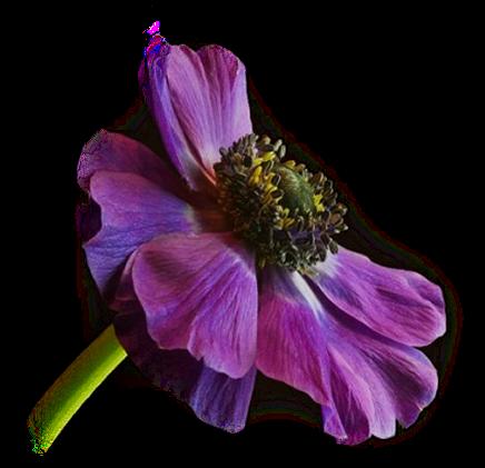 tubes_fleurs_tiram_739