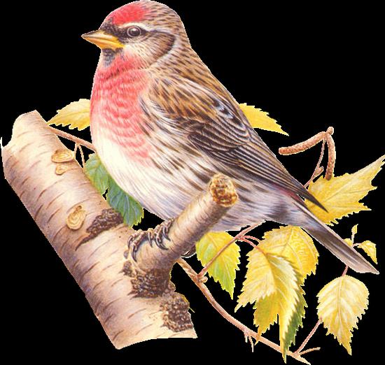 tubes_oiseaux_tiram_50