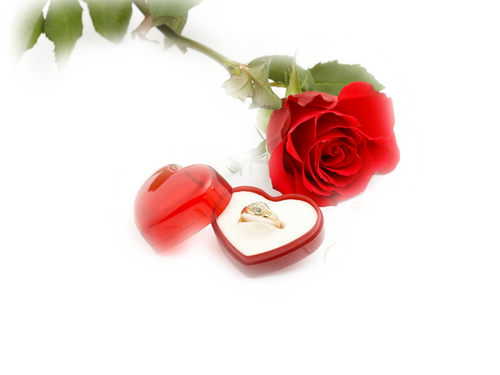 tubes_fleurs_saint_valentin_tiram_240
