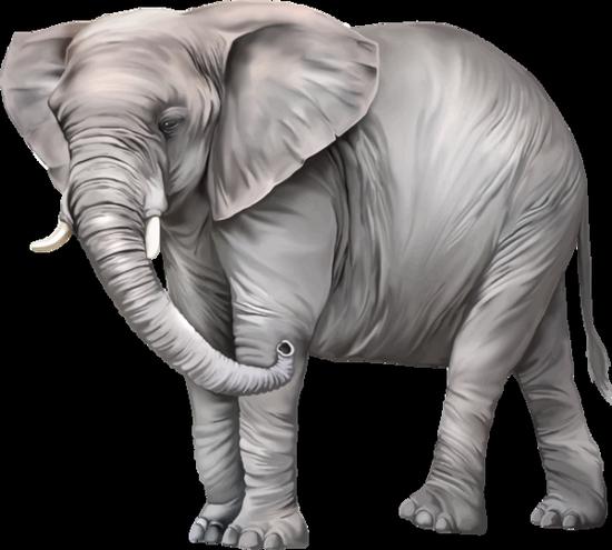 tubes_elephants_tiram_117