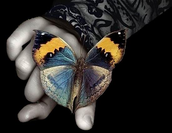 tubes_papillon_tiram_849
