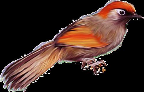 tubes_oiseaux_tiram_6
