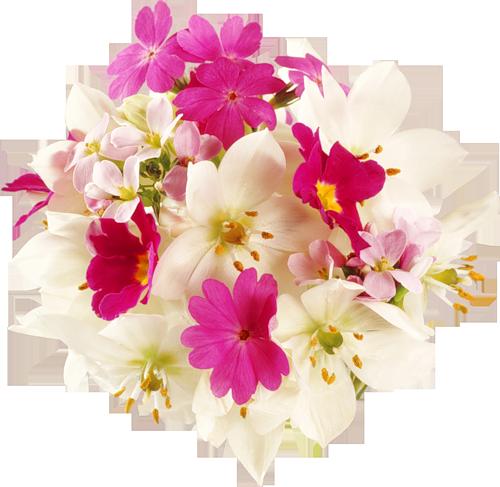 tubes_fleurs_tiram_581