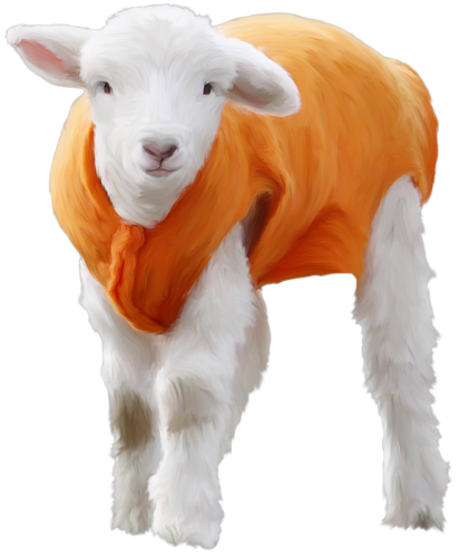 mouton_tiram_9