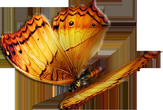tubes_papillon_tiram_242