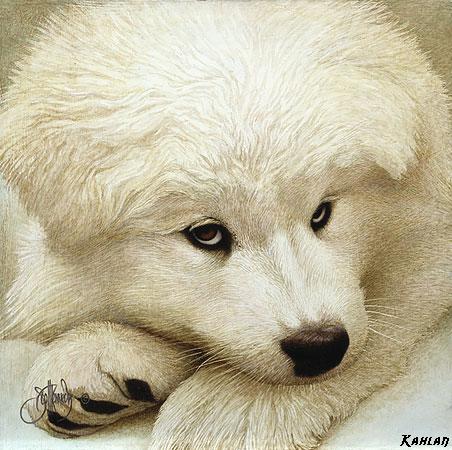 chien_tiram_122