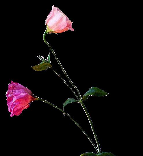 tubes_fleurs_tiram_543