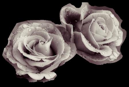 tubes_fleurs_tiram_788
