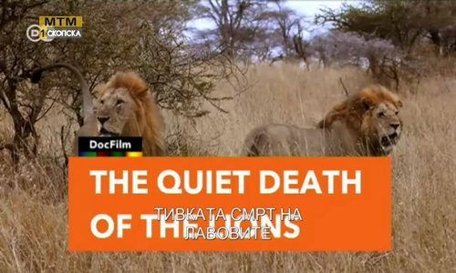 The quiet death of the lions