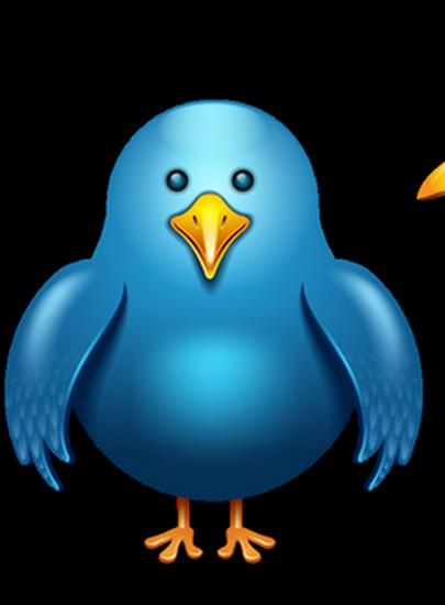 tubes_oiseaux_tiram_161