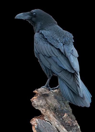 tubes_oiseaux_tiram_116
