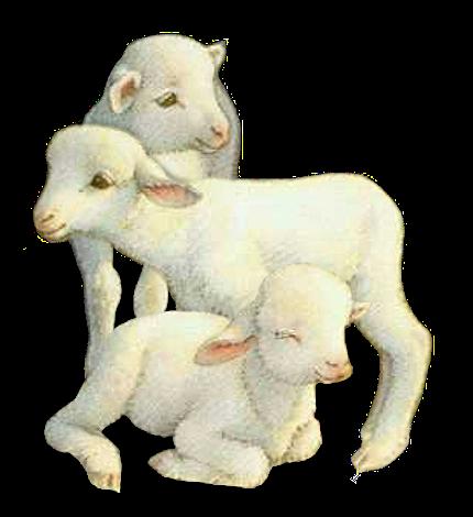 mouton_tiram_27