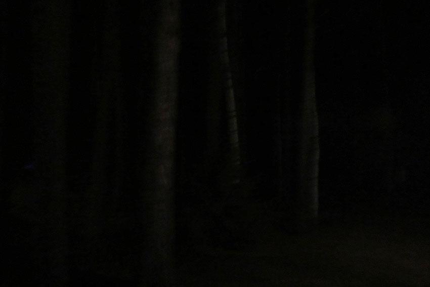 yahonty-dark-06
