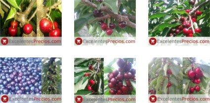 Cereza, fruta, planta, clase, propiedades...