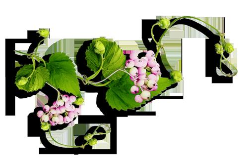 tubes_fleurs_tiram_685