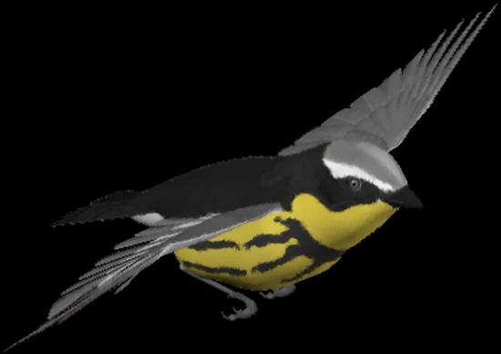 tubes_oiseaux_tiram_217