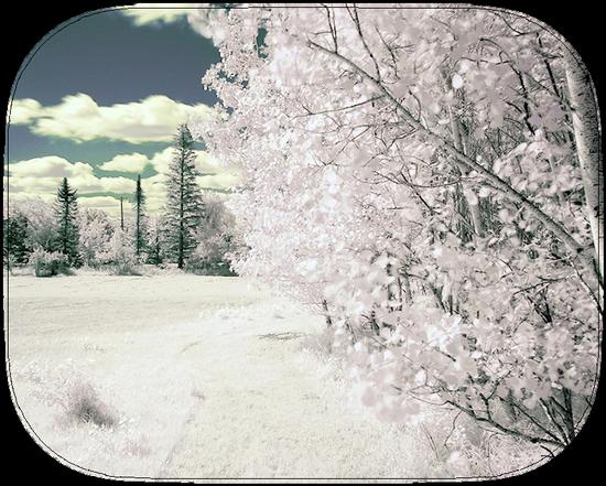 paysage_tiram_844