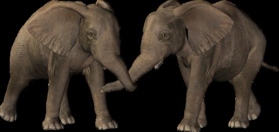 tubes_elephants_tiram_52