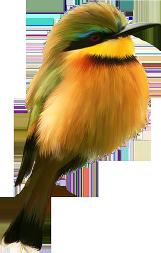 tubes_oiseaux_tiram_95