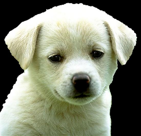 chien_tiram_13