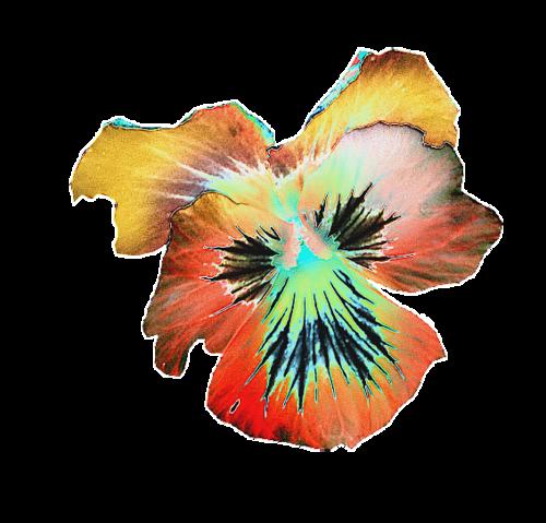 fleurs_paques_tiram_27