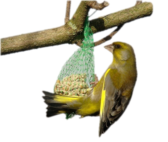 tubes_oiseaux_tiram_52