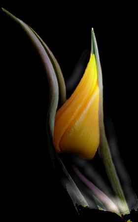 tubes_fleurs_tiram_825