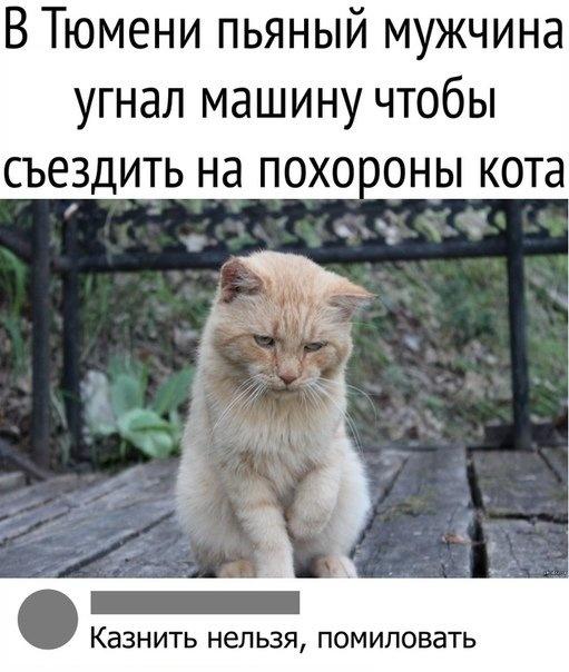 1539036526_drunkcow_net_foto_prikoly_30