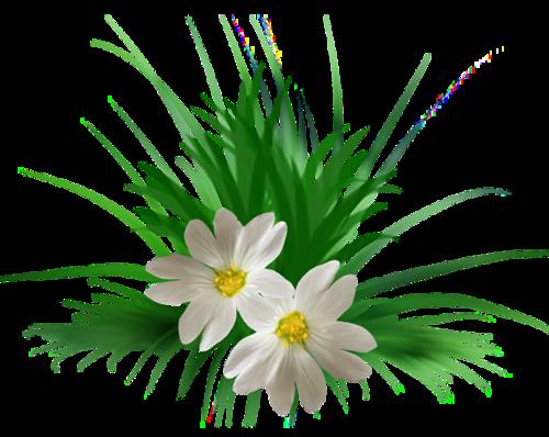 fleurs_paques_tiram_158