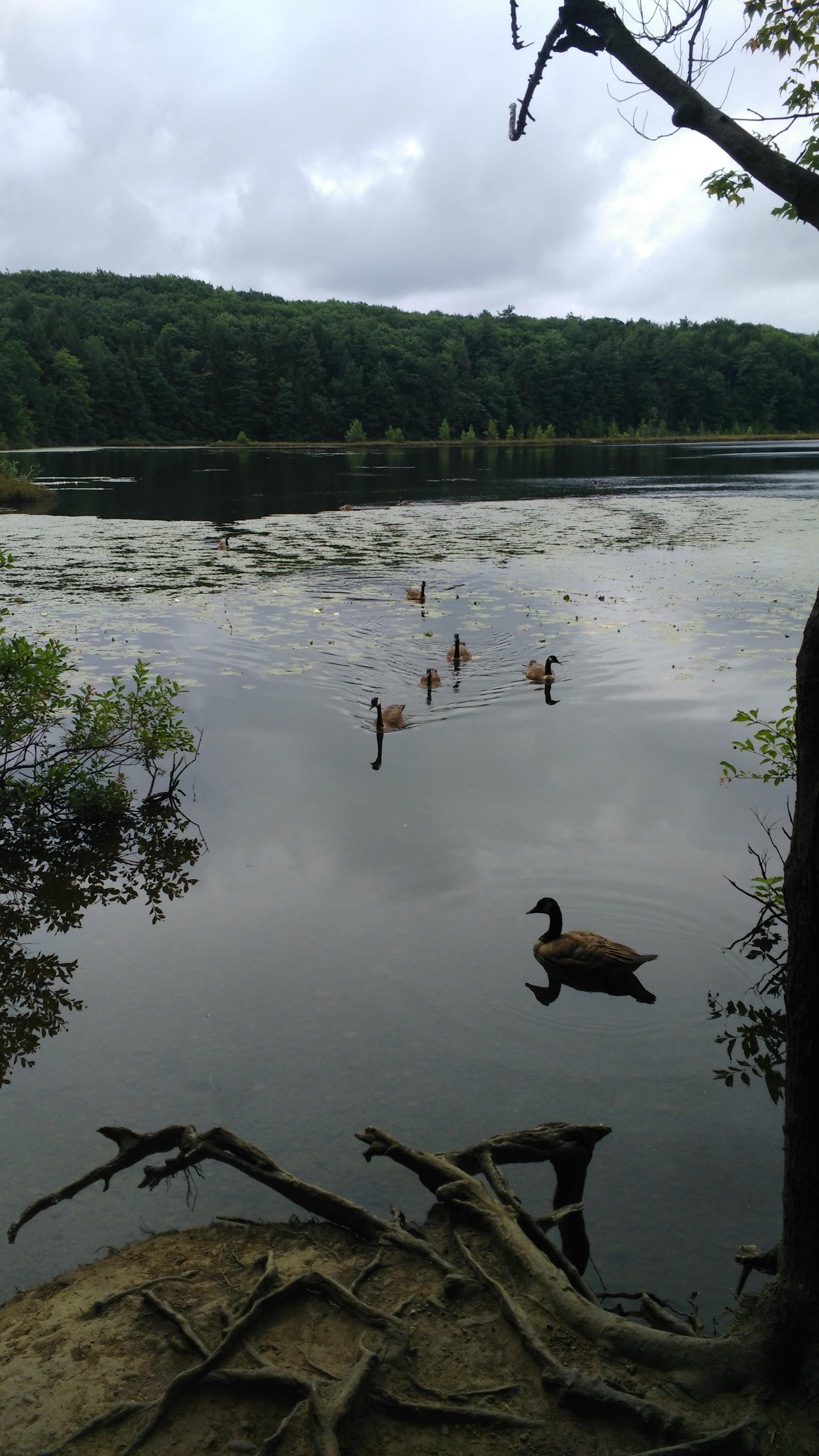 28 July Csehy and Moss Lake 6