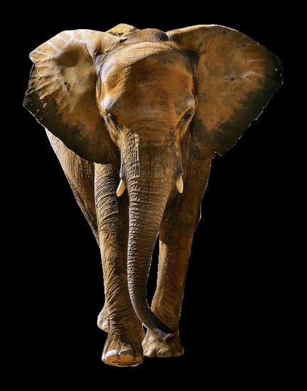 tubes_elephants_tiram_558