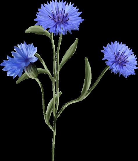 tubes_fleurs_tiram_78