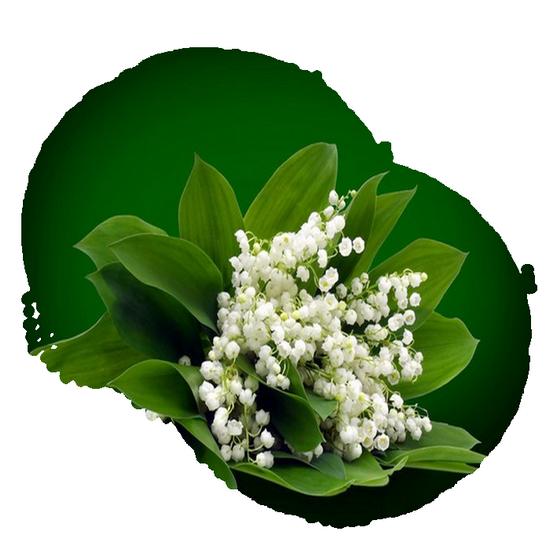 tubes_fleurs_tiram_373