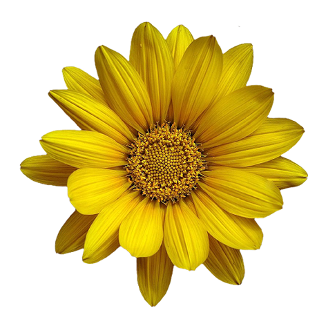 tubes_fleurs_tiram_940