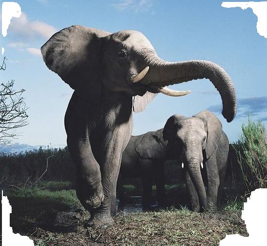 tubes_elephants_tiram_71