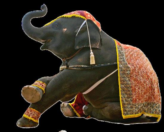 tubes_elephants_tiram_240