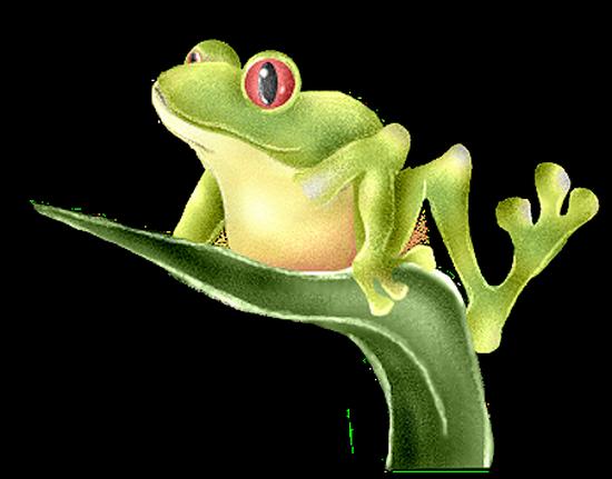 grenouille_tiram_75