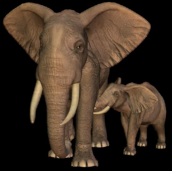 tubes_elephants_tiram_136