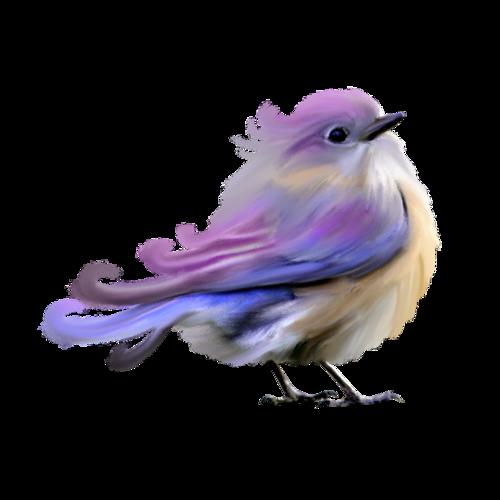 tubes_oiseaux_tiram_25