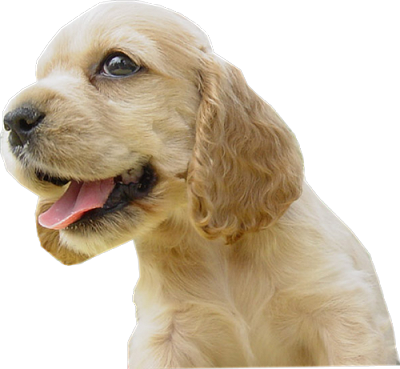 chien_tiram_115