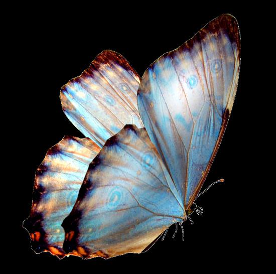tubes_papillon_tiram_770